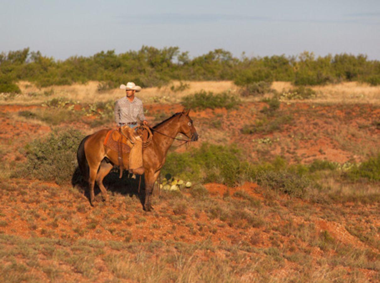Rinderzucht wird auf der Waggoner Ranch auch noch betrieben ... (Quelle: Briggs Freeman Sotheby's International Realty)